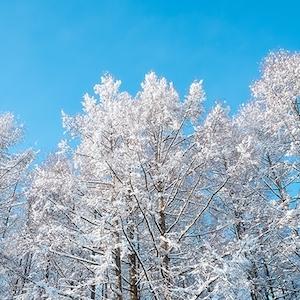 雪アイコン