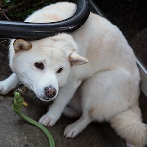 犬アイコン_2