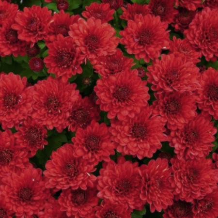 赤い花アイコン