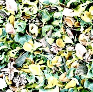 葉っぱアイコン