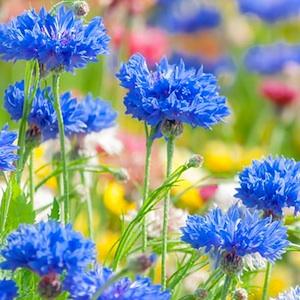 春の花アイコン