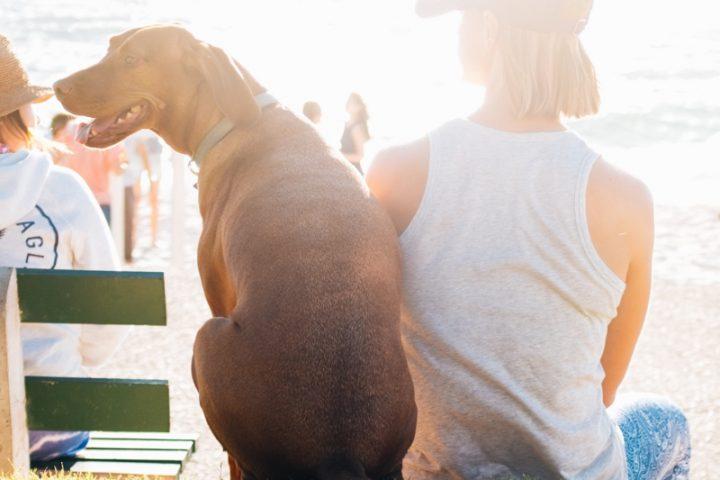 犬と海アイコン