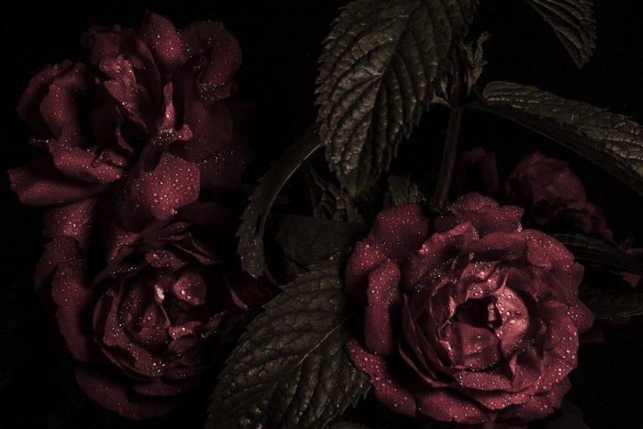 薔薇アイコン