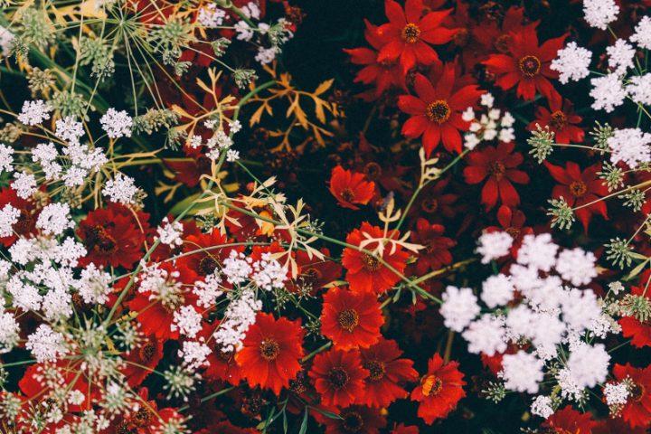 赤白花アイコン